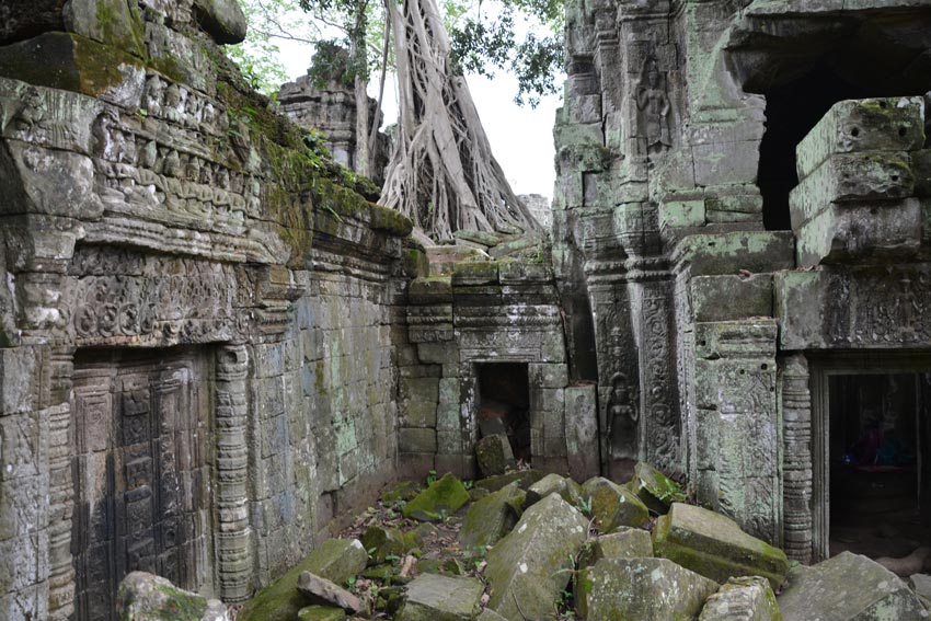 A Ta Prohm tree towers over its walls