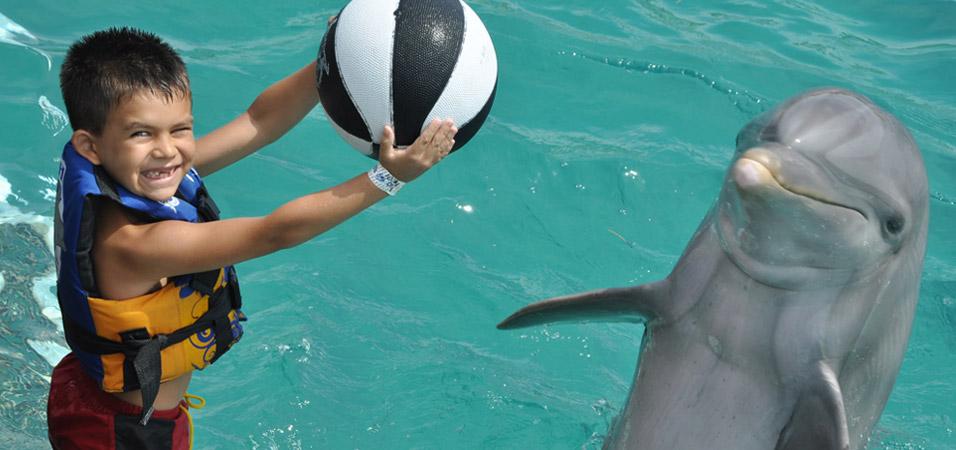 dolphin-cabo