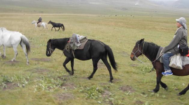 herding-horses