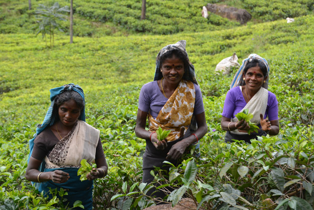 Tea plantation workers in Sri Lanka.