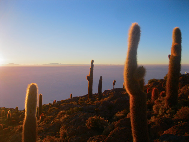 From Sam: When I was travelling in South America with my partner, I always had a habit of personifying the cacti we saw. Here, it looked to me just like this crowd of cacti were gathering around to watch the sunrise with us, as though they hadn't been standing there all night in exactly the same position. I imagined them sighing as the first rays began to warm them, their spikes prickling with appreciation of the new day's light.