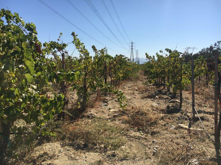 Photo of Rancho Cucamonga Vineyards