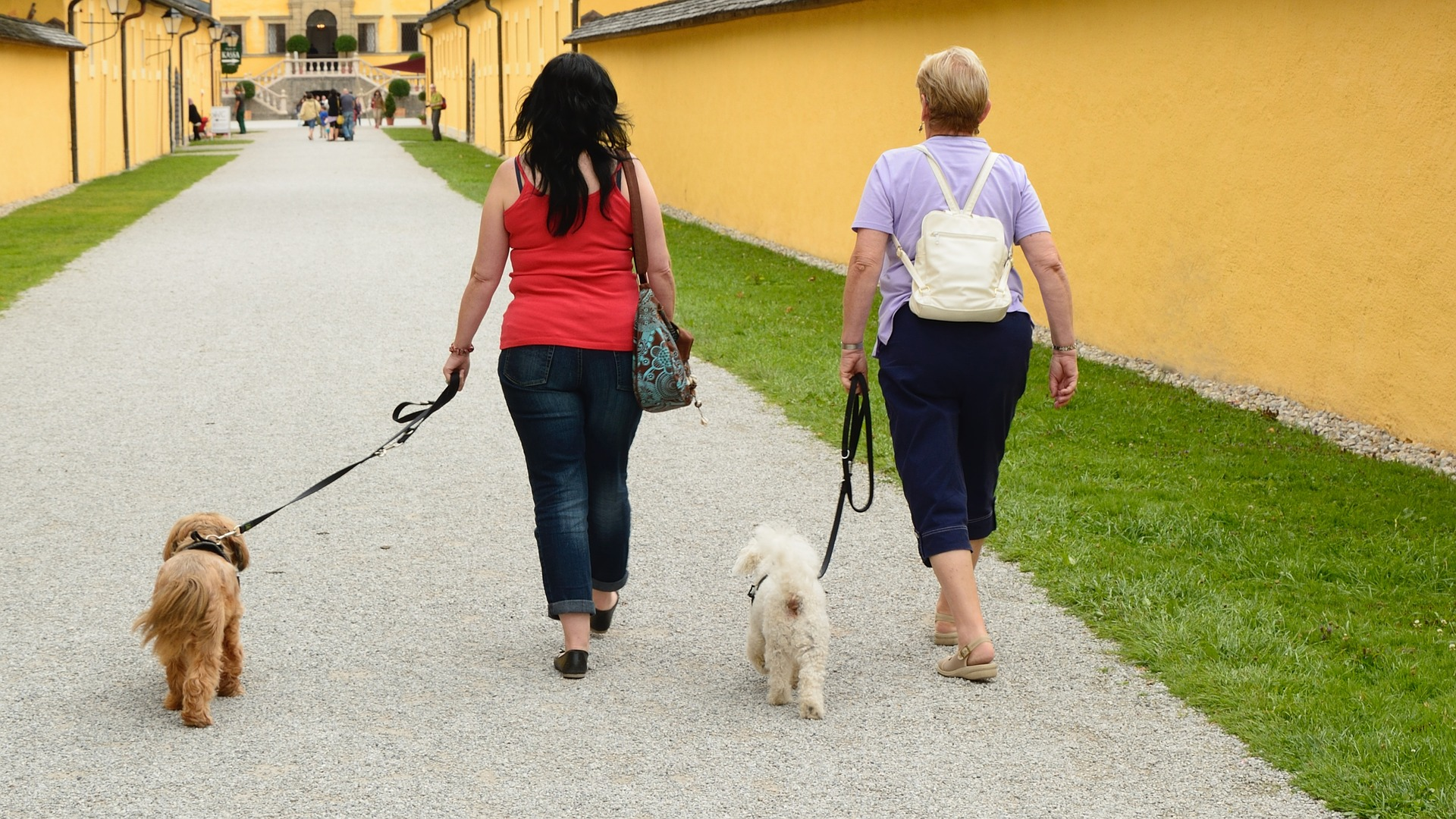 Drug Rehab Centers That Allow Dogs