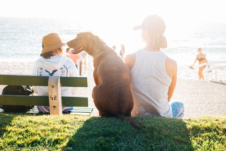 Long beach pet friendly rehab