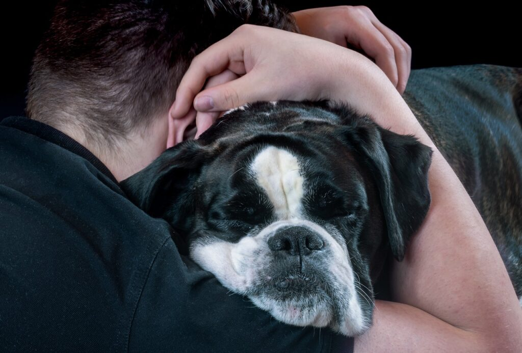 The Benefits Of Therapy Animals Pet Friendly Rehabs