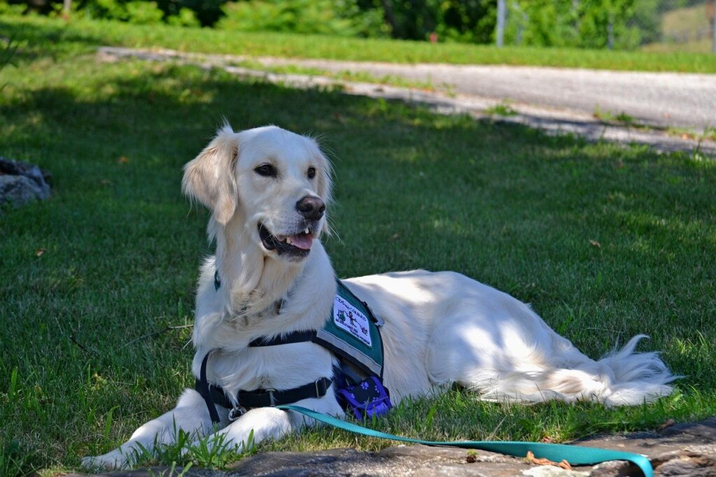 Rehabs That Allow Service Dogs Pet Friendly Rehabs