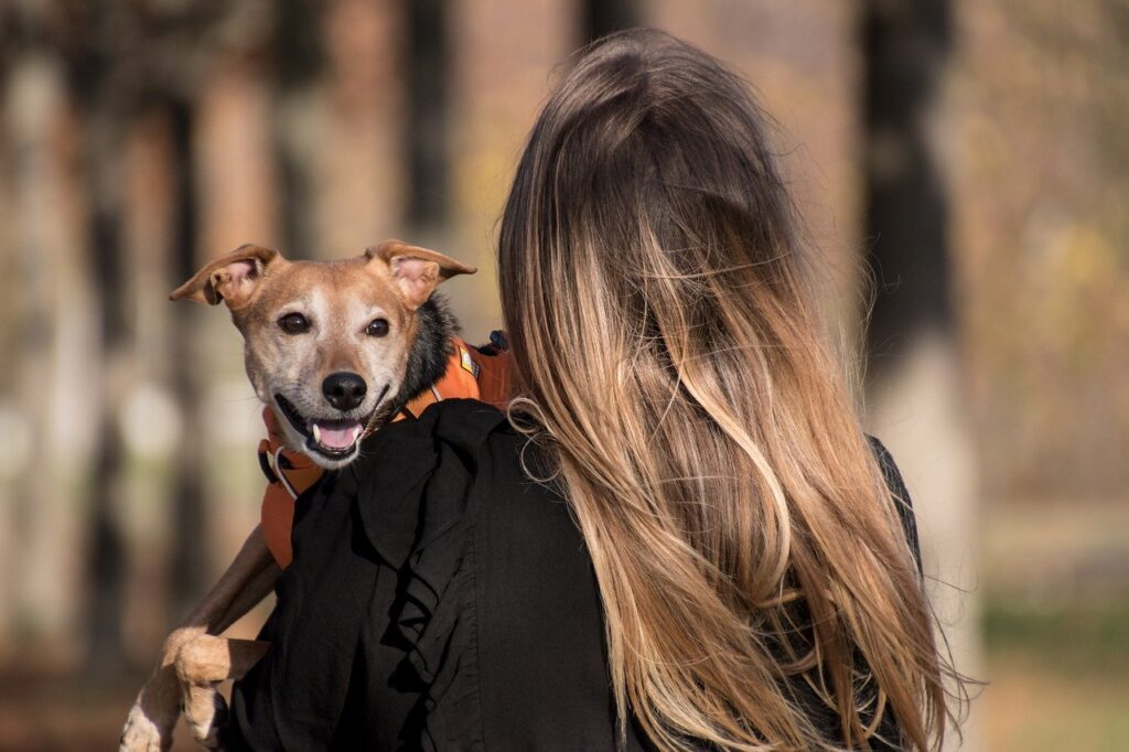 Therapy Animals For Mental Illness Pet Friendly Rehabs