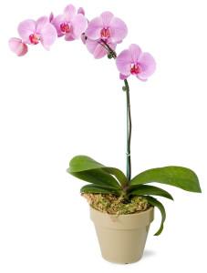 seminar-orchids-mahoney-garden-centers_9