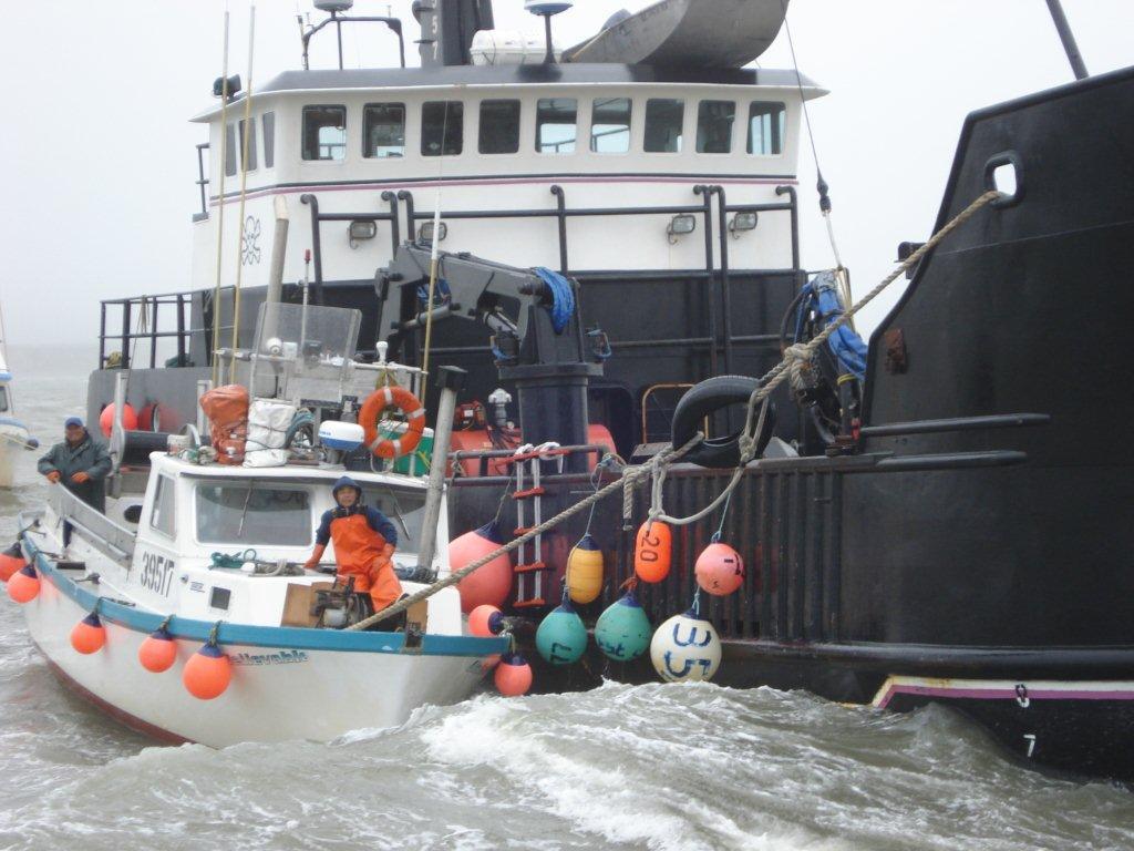 Domenicos on the Wharf fishing