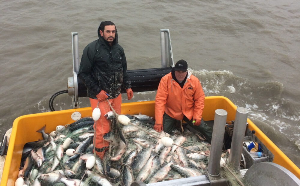 Domenicos on the Wharf fish that have been caught
