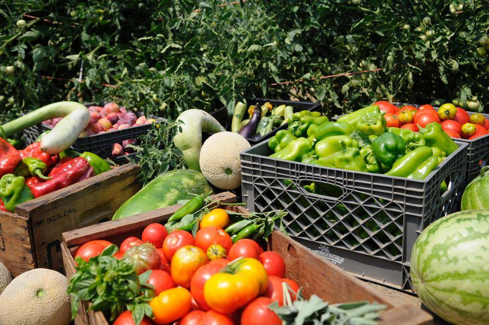 Domenicos on the Wharf Fresh Sustainable Ingredients