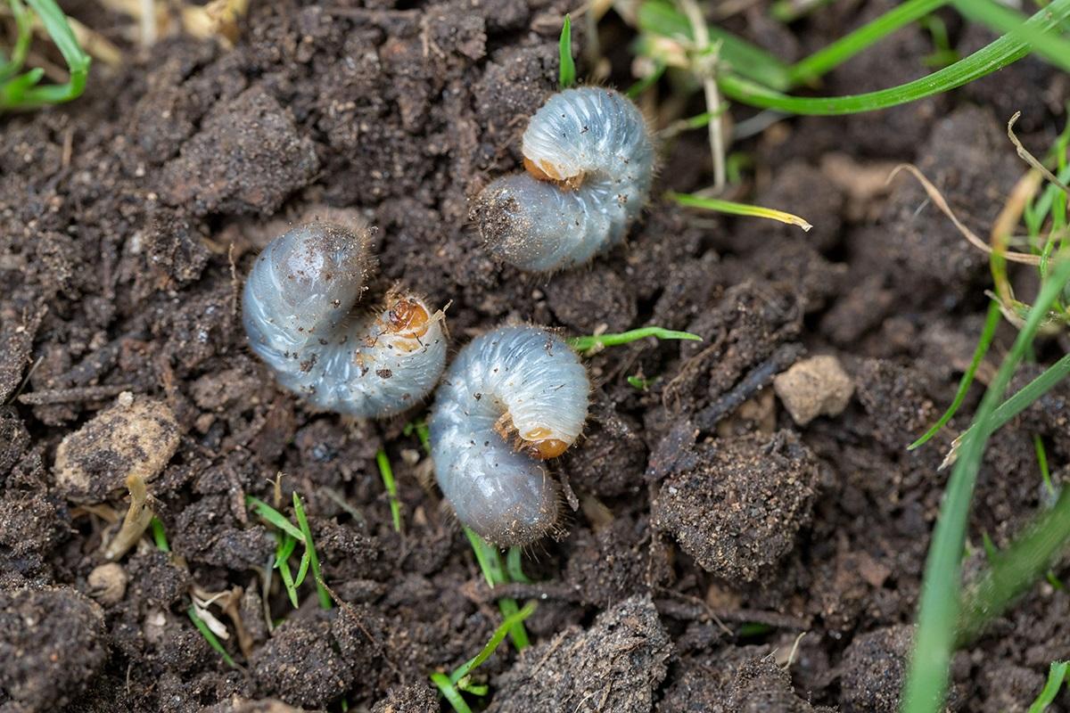 Insect Control Montgomery, AL | Grub Control Prattville, AL | Insect Control Pike Road, AL