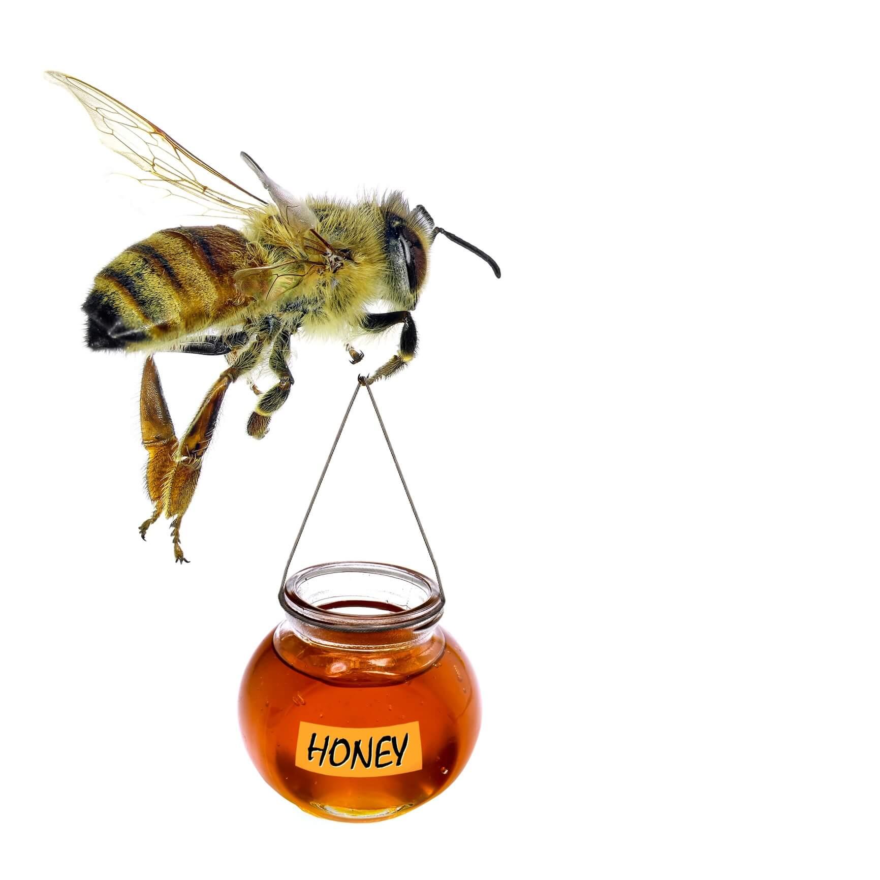 Queen Bee Venom natures botox