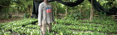 Coffee Farming Takes Root in Ghana