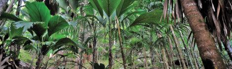 Seychelles Worldwide Leader in Renewable Energy