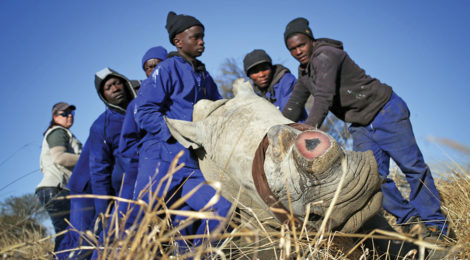 SADC Shows United  Front in Poaching Fight