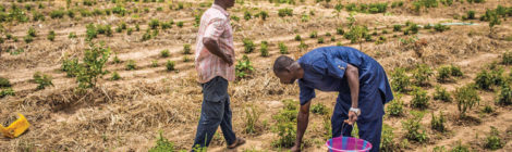 Program Helps Guinean Farmers
