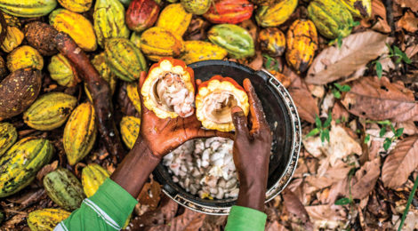 Côte d'Ivoire Will Use Cocoa Waste for Power