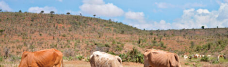 Women Pool Savings  to Invest in Cattle
