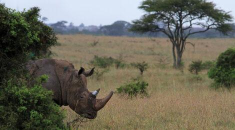 سلطات هونج كونج توقف  مهربي وحيد القرن