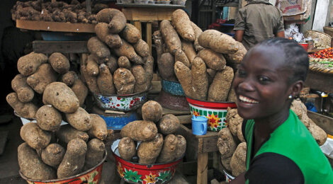 Can Nigeria's Yams Power a Nation?