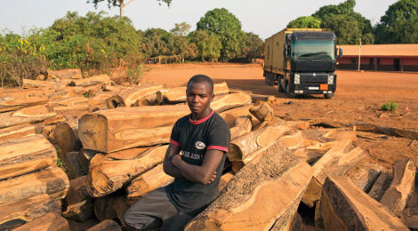 Stripping Africa's Forests