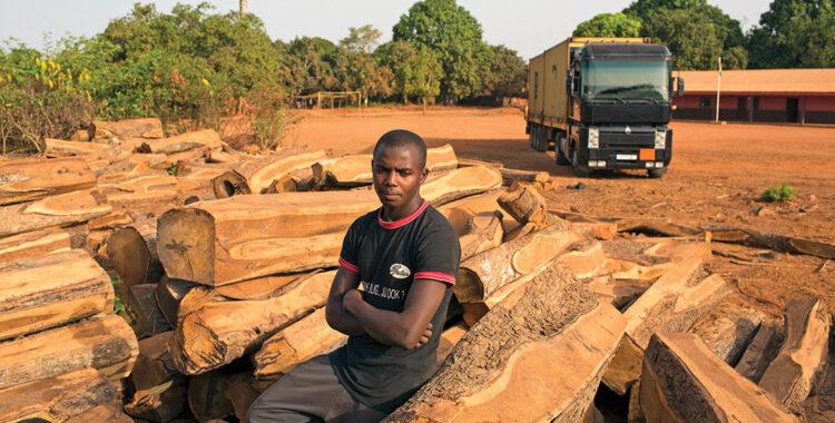 L'ABATTAGE DES FORÊTS AFRICAINES
