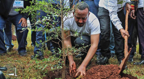 Ethiopia Sets World Record by Planting 353M Trees in a Day