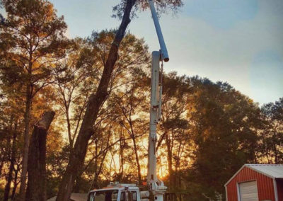 Tree Pruning & Trimming Montgomery, Prattville, Millbrook, AL