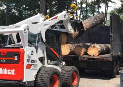 taylortreeservicestreeremoval