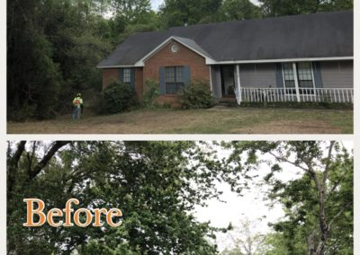 montgomery-tree-trimming-pruning