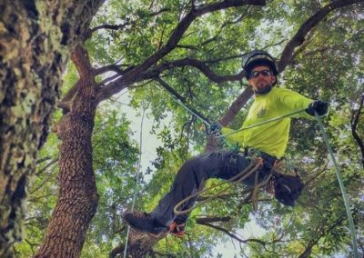 tree-trimming-prattville-al