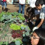 DSCF6341 crop