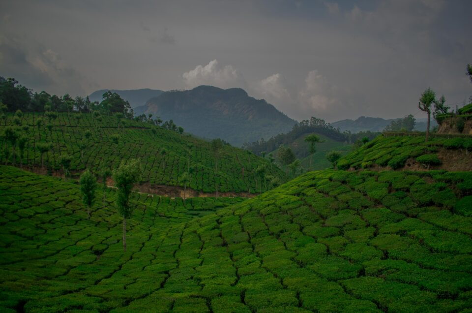 Munnar, Kerala - Top Places to Visit and Things to do in Gods own Country
