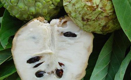 Atemoya-fruit