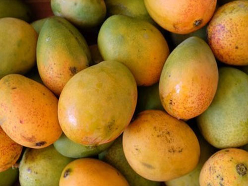 Carrie Mangoes