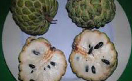 Custard-Apple-3