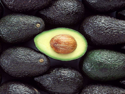 Florida Haas Avocado