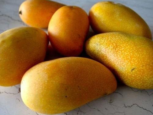 Lemon Zest Mango's