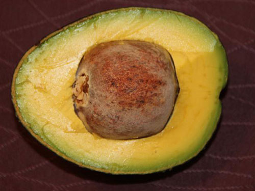 Oro Negro Avocado