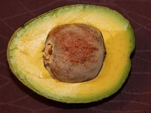 Oro Negro Avocado