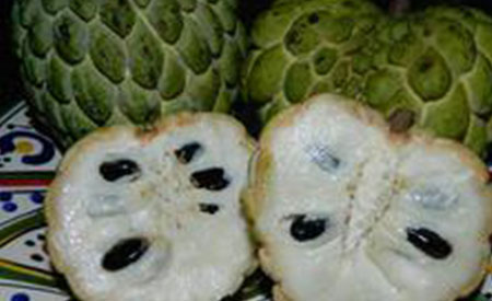 Sugar-Apple-3