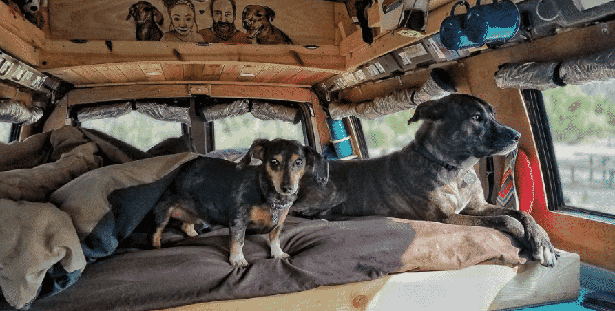 Picture of two dogs in van