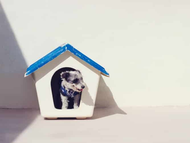 pet sitter online jobs for stay at home moms. Image of dog in doghouse