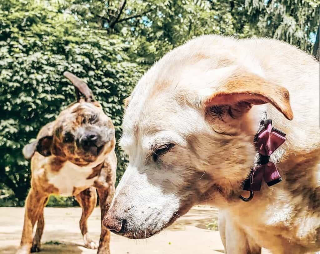 Our dogs Jojo and Peny image