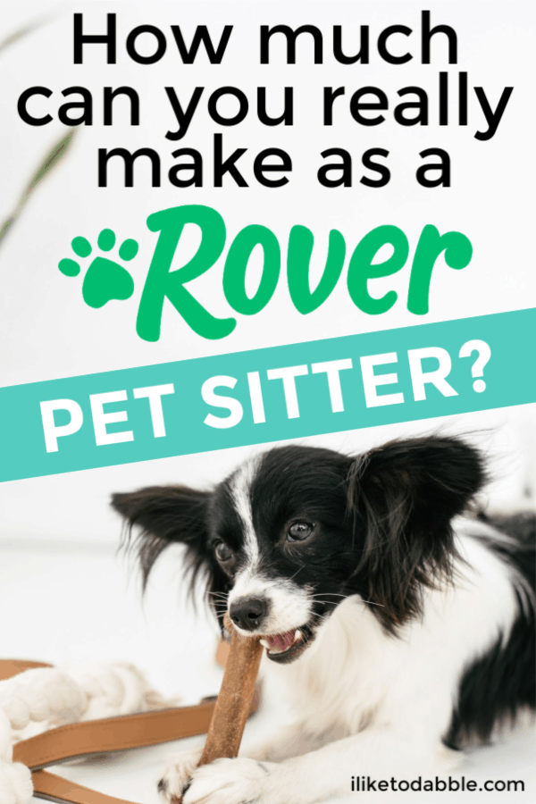 How much can you really make as a Rover pet sitter? Find out in this personal Rover sitter review of mine from my own experience. Image of dog in bed chewing on a bone. #rover #petsitting #dogwalking #makemoney #sidehustle #sidehustles #moneymakingapps #roverapp #roverreview