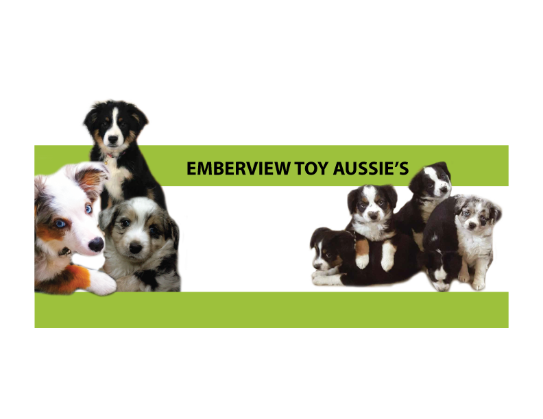Emberview Toy Aussies - Booth 405