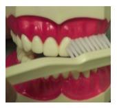 toothbrush Lakeway