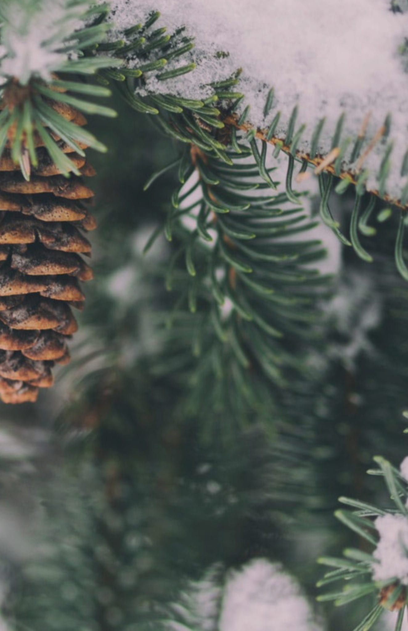 Holiday Hours + Midtown + Lawrenceville +Smyrna