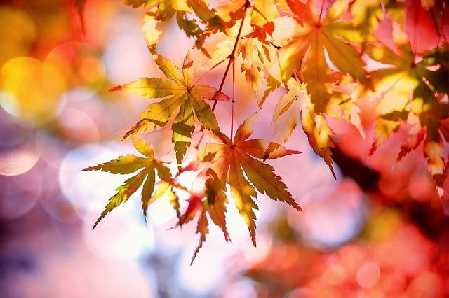 Exciting Ways to Celebrate Autumn